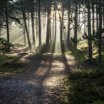 Skogsglänta.