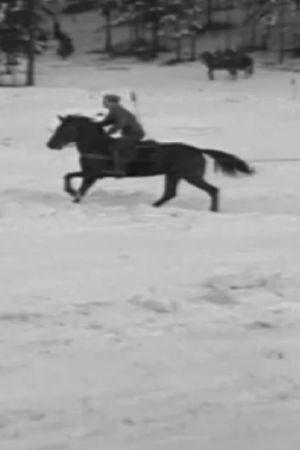 En häst frar en skidåkare efter sig