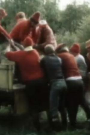 Den skjutna älgen släpas upp på lastbilsflaket, 1981
