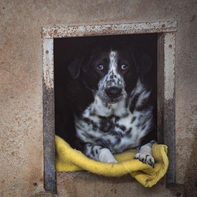 Koiria on jätetty eläinsuojelukeskuksiin viime aikoina ennätysmäärä Britanniassa.n 15 vuoteen.