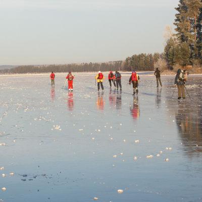 Långfärdsskridskoåkare tar sig fram på blank is.
