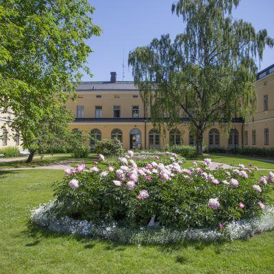 Kukkia Lapinlahden sairaala-alueen päärakennuksen sisäpihalla.