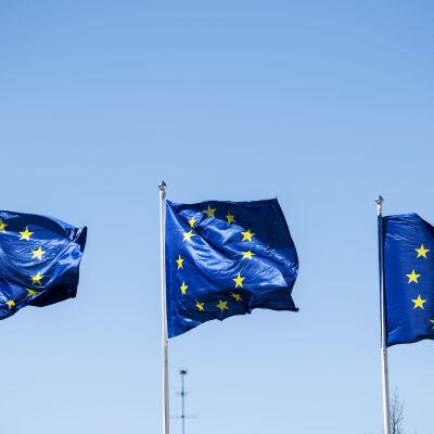 Kuvassa on kolme Euroopan unionin lippua.