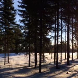 Metsäinen näkymä auringonlaskun aikaan.