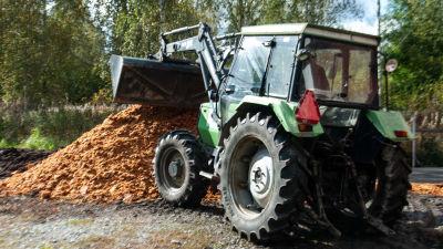 En traktor med lyftskopa hanterar pressrester av äpplen
