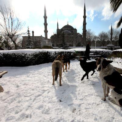 Hundar i snön utanför Blå mosken