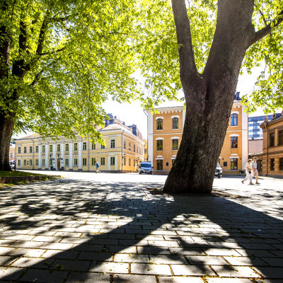 Gamla Stortorget i Åbo med gröna träd i förgrunden.