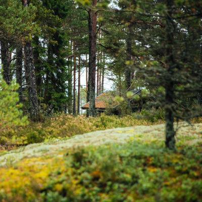 Skog i förgrunden, i bakgrunden ett tak till en stuga.