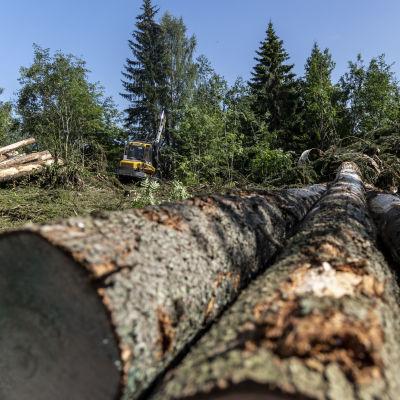 Metsämoto korjaamassa myrskyn tuhoamaa metsää Tuusniemellä