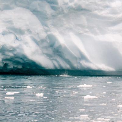Jäävuoren sulamisvesi valuu mereen Ilulissatissa