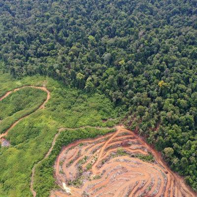 Luftbild på avskogning i Indonesiens regnskog på grund av palmoljeplantage.