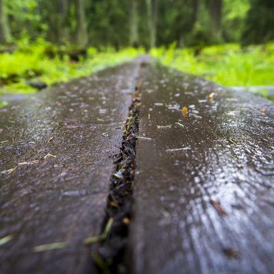 Pitkospuut Helsingin keskuspuistossa