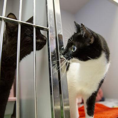 Kissoja Viikin löytöeläintalossa