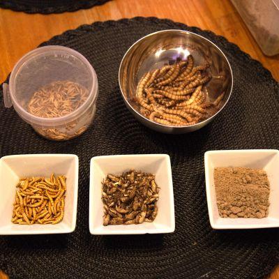 Syötäväksi kelpaavia hyönteisiä on jo nyt monenlaisia