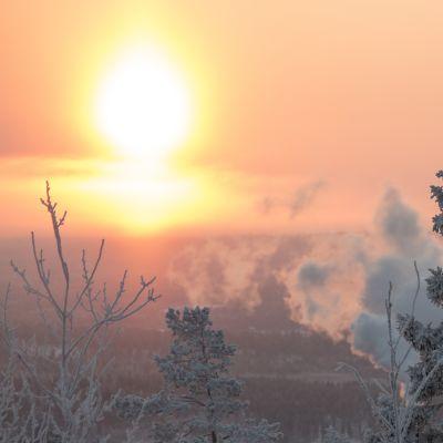Ounasvaara, Rovaniemi, pakkanen, metsä