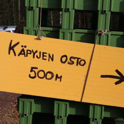 Käpyjen kerääjiä opastettiin ostopaikalle Rovaniemellä lokakuussa 2020.