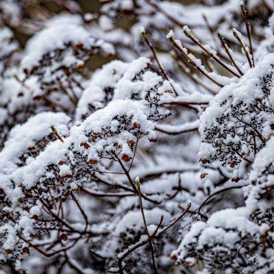 vinter, snöfall