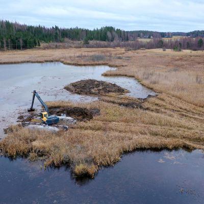 Saarekkeiden kaivuutyöt käynnissä Likolammella Kuopion Riistavedellä lokakuussa 2021.