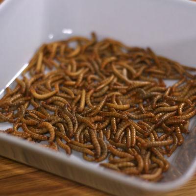 mjölbaggens larver