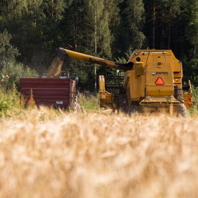 vilja, maatalous