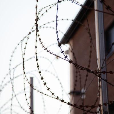 Mikkelin vankilan ulkoilupihan piikkilanka-aitaa.