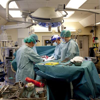 Ett läkarteam vid Sahlgrenska sjukhuset övar på att göra en livmordertransplantation.