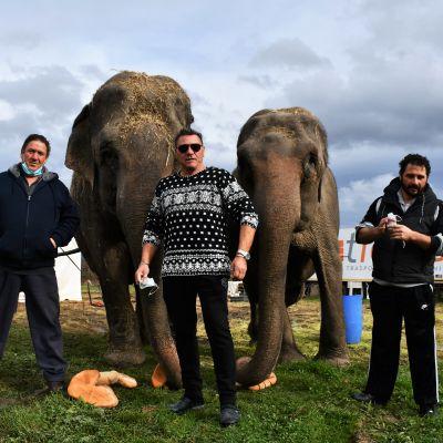 Bröderna Mario och Pino D´Amico och Pinos son Derek. I bakgrunden elefanterna Babi och Kama.