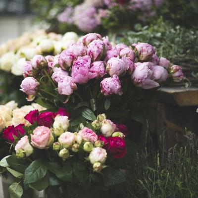 Pioneja ja ruusuja myytävänä kukkakaupassa.
