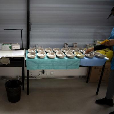 Sjukskötare förbereder vaccindoser.