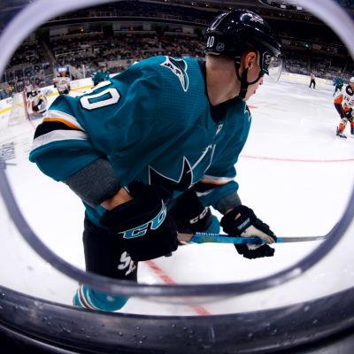 Antti Suomela, San Jose Sharks