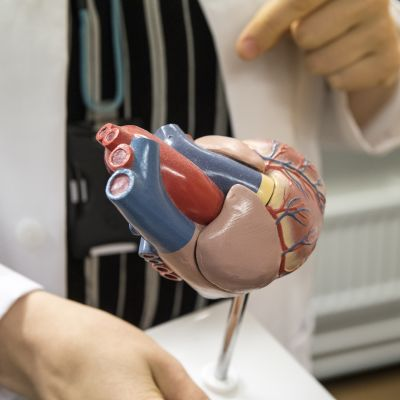 lääkäri selittää sydämen toimintaa