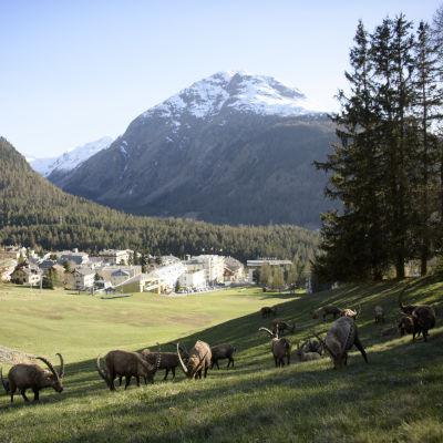 Ett schweiziskt alplandskap