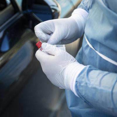 En person med plasthandskar på sig håller i ett provrör (coronavirustest).