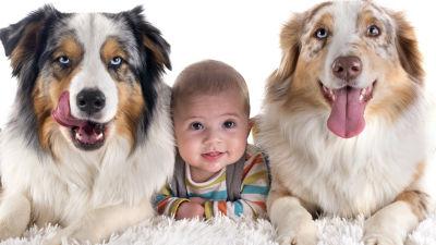 Två stora hundar och en baby på en lurvis matta