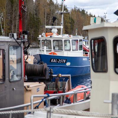 Saimaan Kalan troolausaluksia Joutsenon satamassa.