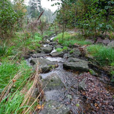 Sammonlahden kosteikolla virtaa puro.