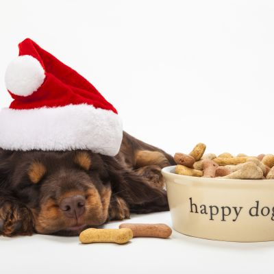Hundvalp som sover framför skål med hundgodis.
