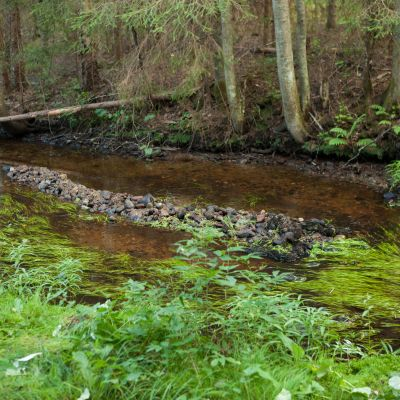 Kuva purosta, johon on lisätty soraa taimenien avuksi.