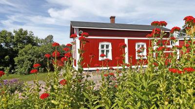 I förgrunden syns blommor, i bakgrunden en röd sommarstuga.