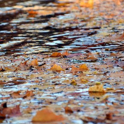 Höstiga löv flyter i vatten.
