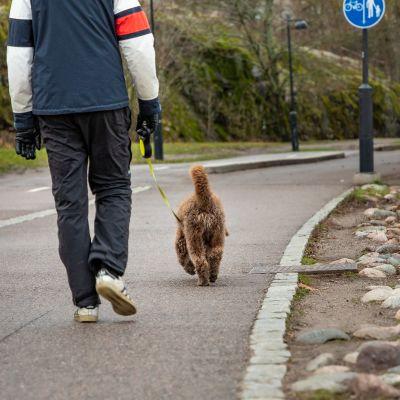 Koiran ulkoilutusta Töölönlahdella