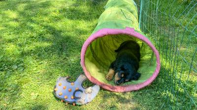 En hundvalp sover inne i en tunnel av plast.