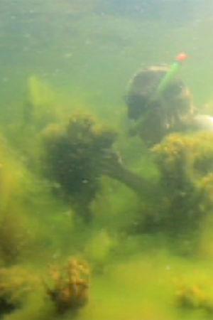 Dykare på havsbottnen