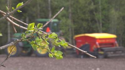 En trädkvist i förgrunden och en traktor med harv syns oskarp i bakgrunden.