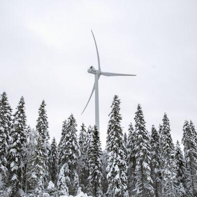 Vindkraftverk i Torneå.