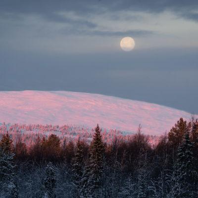 Kuu loistaa vaaleanpunaisen Yllästunturin yllä joulukuussa.
