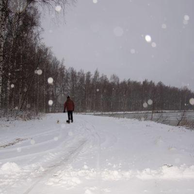 Snön yr vid Metviken i Vasa.