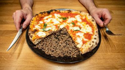 Lautasella pizza ja sitä syöviä hyöntesiä, ihmisen kädet lautasen vierellä.