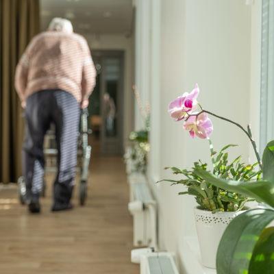 En äldre man har ryggen vänd mot kameran, går med rollator i korridor