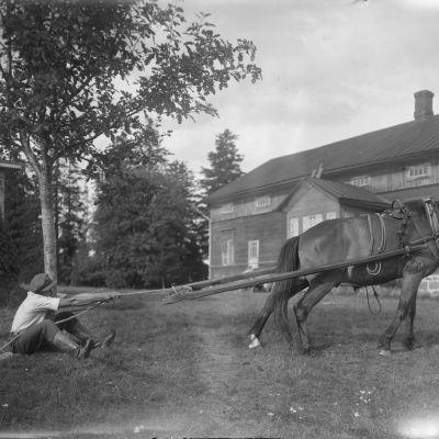 En man drar i ett rep som är fast i en häst. Bilden är tagen 1930 i Sund, Åland.